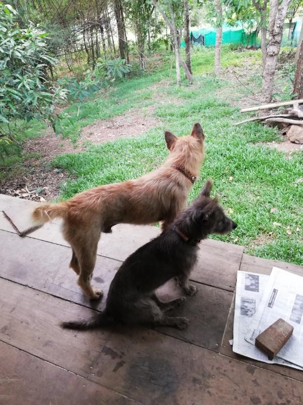 アカ族ホームステイ犬と猫